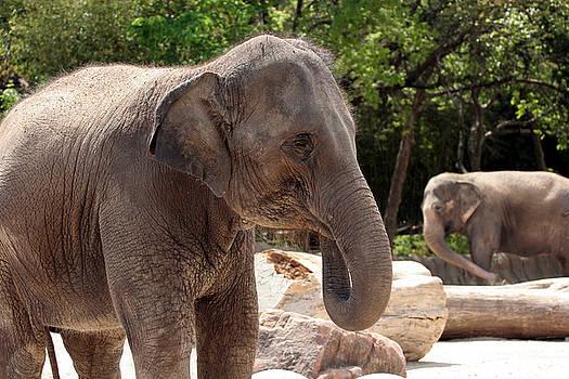 Elephants by Jeannie Burleson
