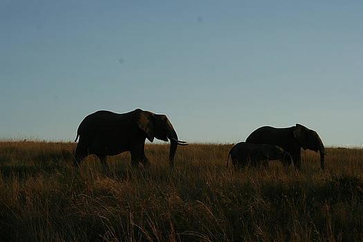Elephants of the Masai by Malik Jaffer