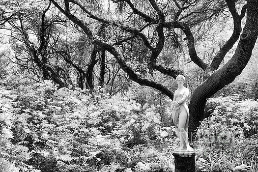 Elizabethan Gardens by Jeff Holbrook