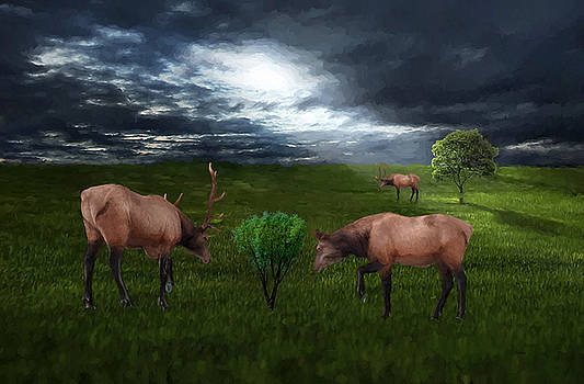 Elk in the Field by Ericamaxine Price