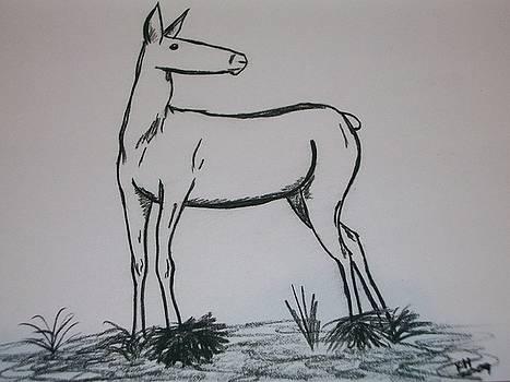 Elk by Kristen Hurley