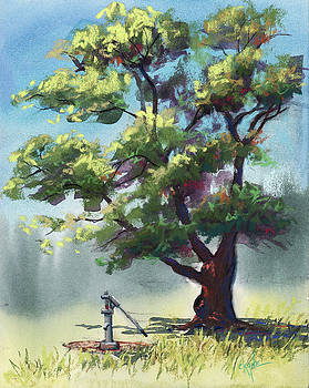 Elm Tree Oasis by Christine Camp