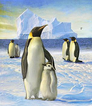 Emperor Penguin Family by R christopher Vest