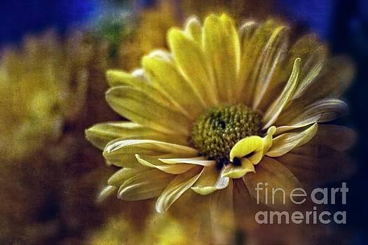 Encounter Floral Contemporary Art #703 by Ella Kaye Dickey
