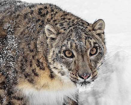 Endangered Beauty D0952 by Wes and Dotty Weber