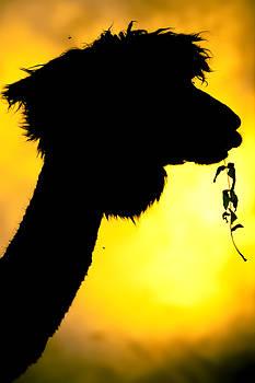 Endless Alpaca by TC Morgan