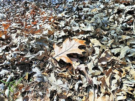 Endurance of a Leaf by Kay Gilley