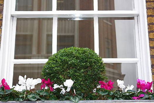 Yvonne Ayoub - England London window box with cyclamen