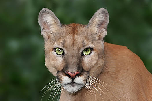 Enya by Big Cat Rescue
