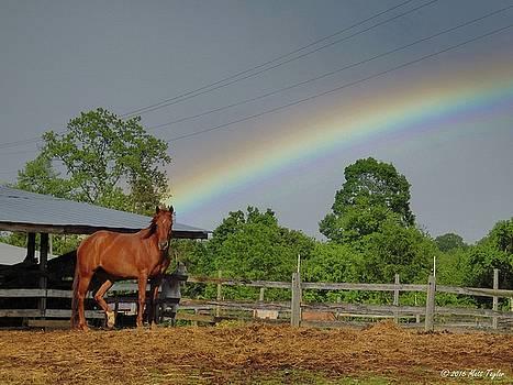 Equine Rainbow by Matt Taylor