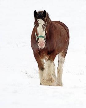 Equus Caballus.. by Nina Stavlund