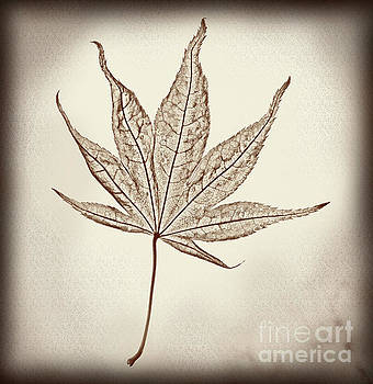 Essence of a Leaf Burnt Edge by Karen Adams
