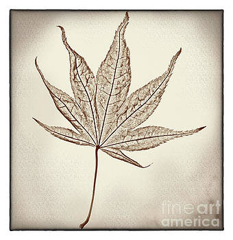 Essence of a Leaf with Border by Karen Adams