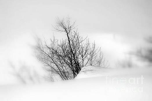 Essence of Winter by Elfriede Fulda