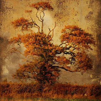Estampe Tree by Sonia Stewart