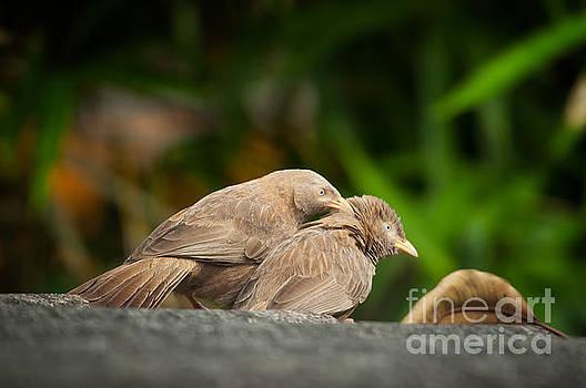Eternal Love by Venura Herath