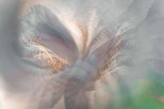 Jenny Rainbow - Ethereal Life 1. Interior Ideas