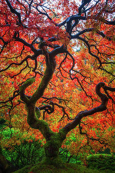 Ethereal Tree Alive by Darren White