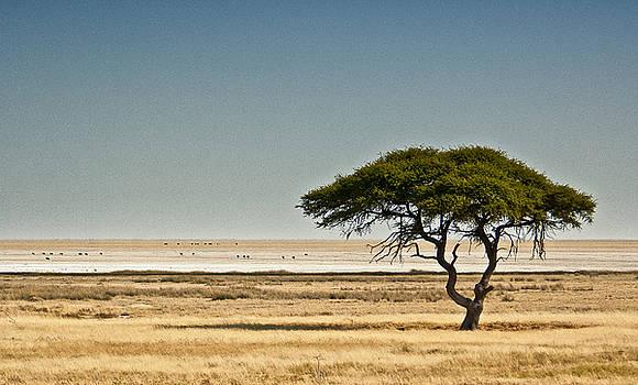 Etosha Tree by Sandy Schepis