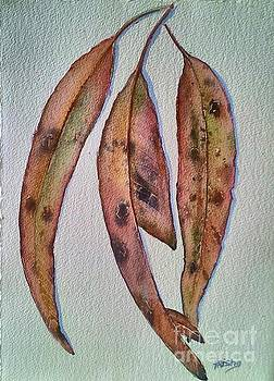 Eucalyptus Leaves by Patricia Pushaw