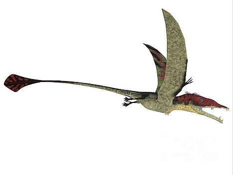 Corey Ford - Eudimorphodon over White