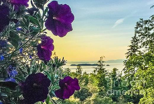 Evening Light on Orcas Island by William Wyckoff