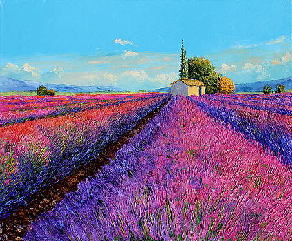 Evening light on the lavenders by Jean-Marc JANIACZYK
