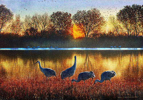 Evening On The Bosque by R christopher Vest
