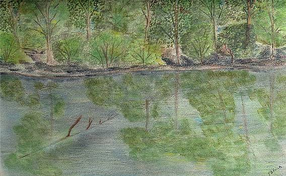 Evening Shadows-oconee State Park by Diane Frick