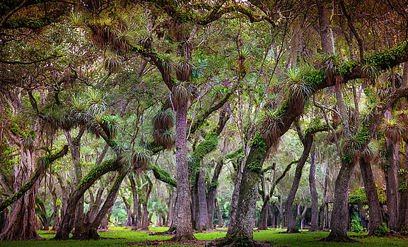 Evergreen by Karen Wiles