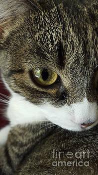 BERNARD JAUBERT - Eye of cat