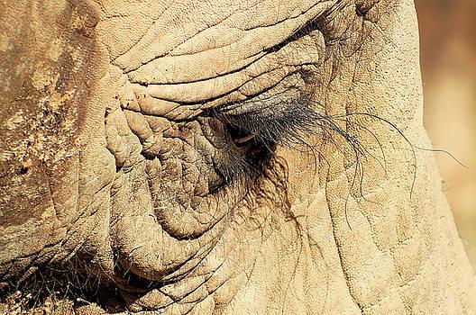 Eye of Constant Sorrow by Cathy Harper