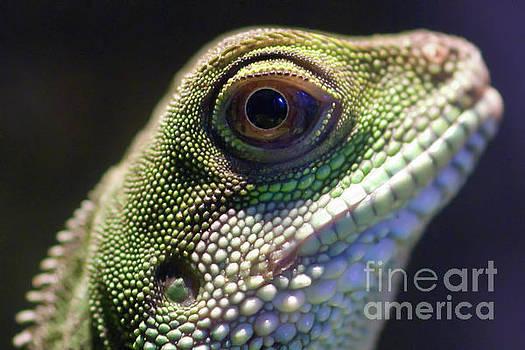 Eye of Lizard by Charles Dobbs