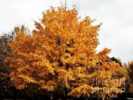 Fabulous Fall Tree  by Christy Ricafrente