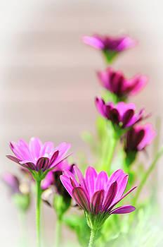 Faded Purple by Jeremy Sage