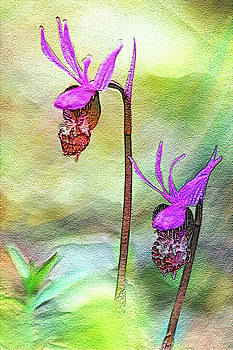 Fairy Slippers  by Marilyn Peterson