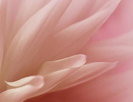 Faithful Flower by The Art Of Marilyn Ridoutt-Greene