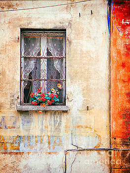 Fake flowers on window by Silvia Ganora