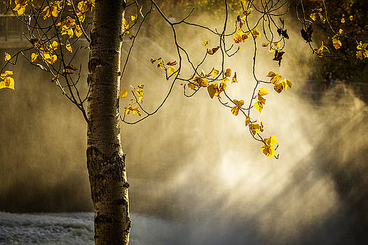 Fall and Fog by Celso Bressan