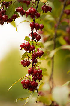 Fall Berries by Tracy Winter