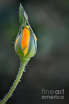 Fall Blossom by Deb Halloran