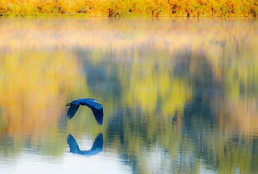 Fall Blue Heron by Bob Marquis