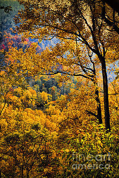 Dave Bosse - Fall Color