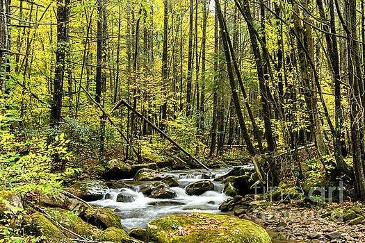 Fall Color Leatherwood Creek by Thomas R Fletcher