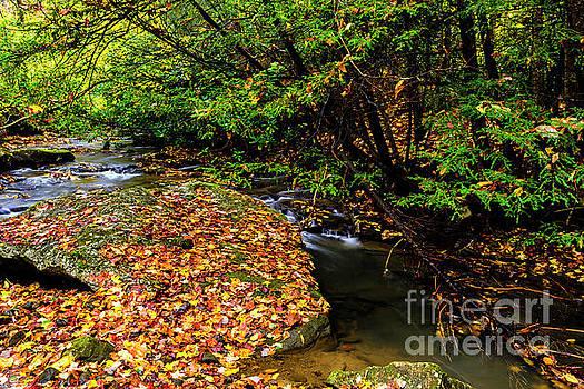 Fall Color on Straight Creek by Thomas R Fletcher