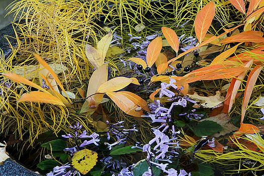 Fall Color Soup by Deborah  Crew-Johnson