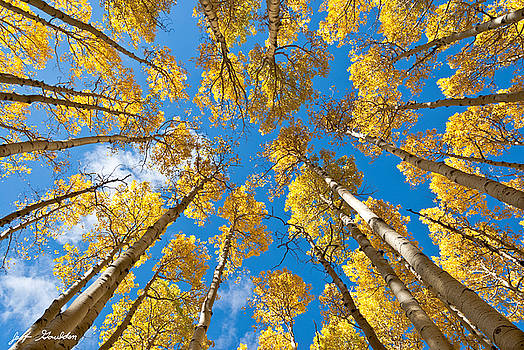 Fall Colored Aspens in the Inner Basin by Jeff Goulden