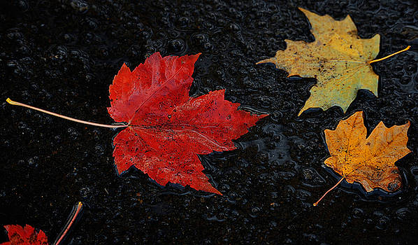 Fall Colors by Brian Fisher