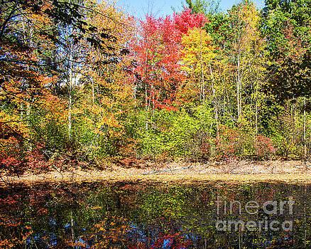 Fall Colors by Cheryl Del Toro