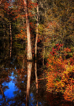 Fall Colors  by Ester Rogers